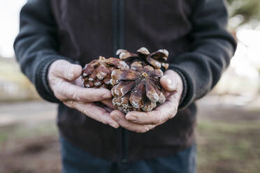 Old man looking at pine cones in his hand - JRFF04122
