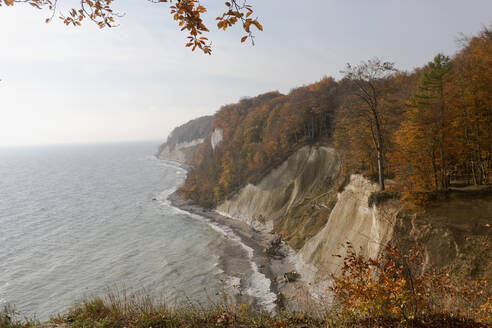 Germany, Ruegen, Chalk cliffs with autumn forest at Baltic sea - ZCF00925
