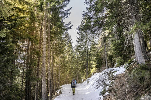 Man on snowshoeing trip in a forest, Lombardy, Valtellina, Italy - MCVF00212