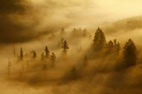 Morning mist and trees in autumn, Saar Valley, Mettlach, Saarland, Germany - CUF54729