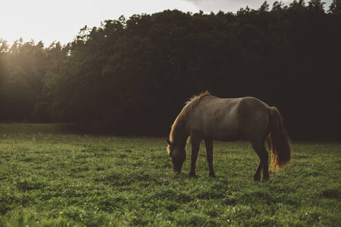 Horse grazing in meadow - JOHF08424