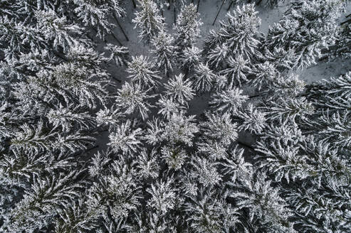 Frozen trees seen from above - JOHF08958