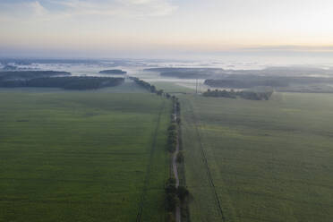 Germany, Brandenburg, Drone view of country road and green fields at foggy dawn - ASCF01096