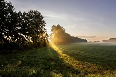 Germany, Brandenburg, Countryside meadow at foggy sunrise - ASCF01102