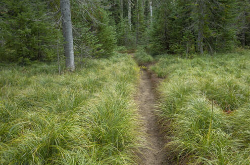 Along the Pacific Crest Trail, Mt. Adams Wilderness, Gifford Pinchot National Forest, Washington - MINF13910
