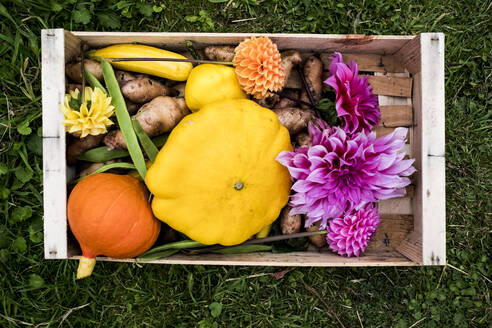 High angle close up of wooden box with fresh vegetables and cut pink Dahlias. - MINF13988