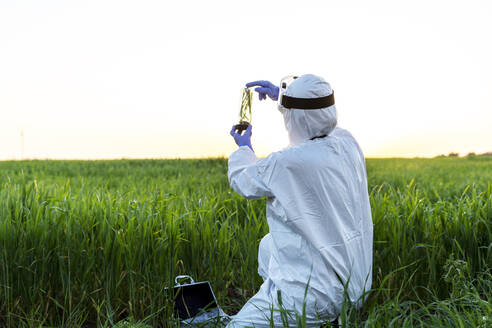 Female scientist researching in field and holding a glass with plant at sunset - ERRF02775