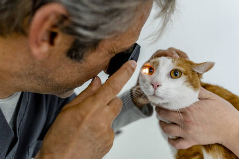 Veterinarian examining cat's eye in clinic - DLTSF00601