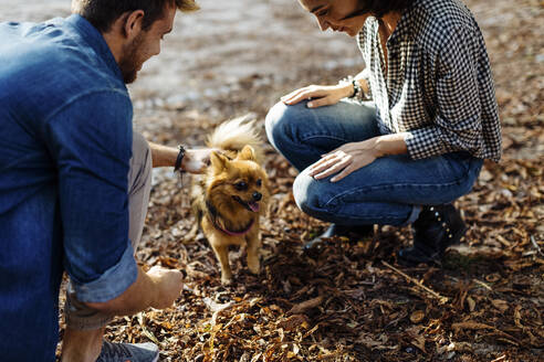Young couple with dog in a park - SODF00719