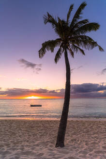 Palm tree on tropical beach during sunset, Le Morne Brabant, Black River district, Mauritius, Indian Ocean, Africa - RHPLF14463