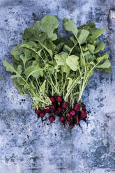 High angle close up of a bunch of freshly picked red radishes on grey background. - MINF14420