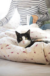 Portrait of cat lying on blanket - LVF08701