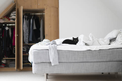 Black cat lying on unmade bed at home - CHPF00662