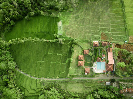 Aerial view of houses at rice fields at Licin, Banyuwangi Regency, East Java, Indonesia. - AAEF07521
