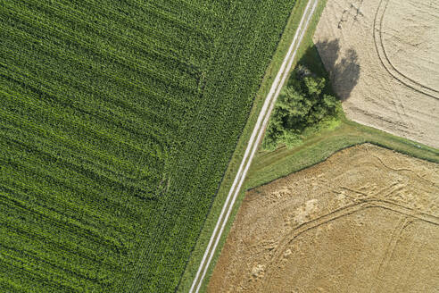 Germany, Bavaria, Drone view of dirt road cutting through countryside fields in summer - RUEF02711