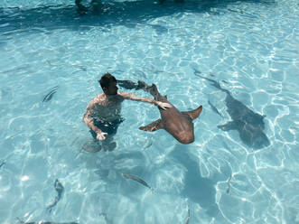 Swimming with Nurse Sharks Bahamas, Exuma, Compas Cay - DAWF01362