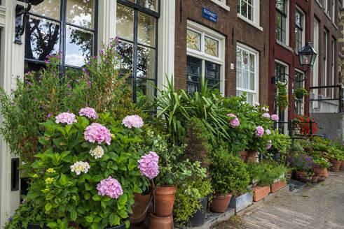 Blumen geschmückte Häuser Kalkmarkt, Amsterdam, Provinz Nordholland, Niederlande, - LBF03022