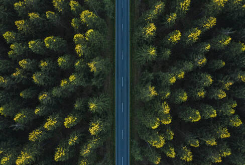 Full Frame Shot Of Road Amidst Trees In Forest - EYF03796