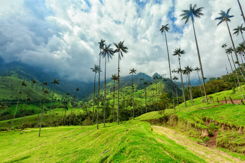 Low Angle View Of Palm Trees By Mountain Against Sky - EYF03823
