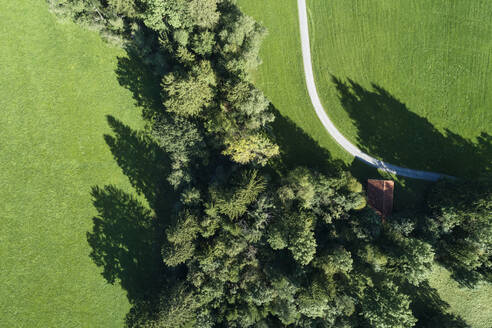 Germany, Bavaria, Drone view of countryside dirt road stretching along green grove - RUEF02800