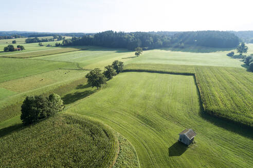 Germany, Bavaria, Drone view of green countryside meadows and cornfields in summer - RUEF02809