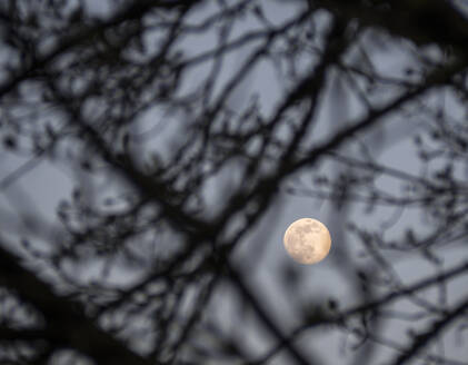 Germany, Low angle view of full moon glowing through tree branches - HUSF00126
