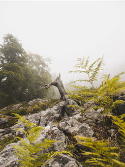 Spain, Cantabria, Tree stump in foggy mountains - FVSF00157