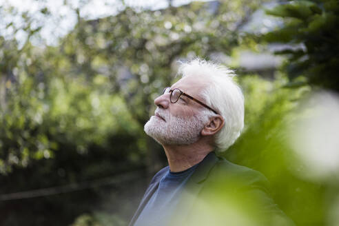 Bearded senior man with white hair looking at distance in garden - JOSEF00257