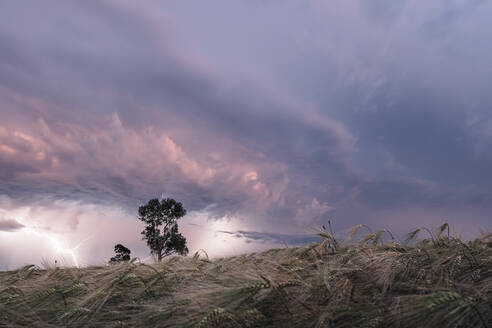 Germany, Bavaria, Berg, Barley field during thunderstorm - WFF00332
