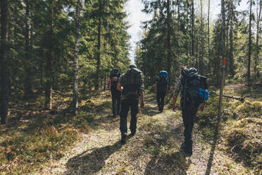 Young people hiking in forest, Sormlandsleden, Sweden - GUSF03719