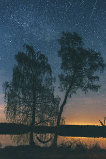 Starry sky over trees in Sodermanland, Nykoping, Sweden - GUSF03752