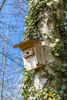 Germany, Low angle view of birdhouse hanging on tree trunk in spring - MABF00571