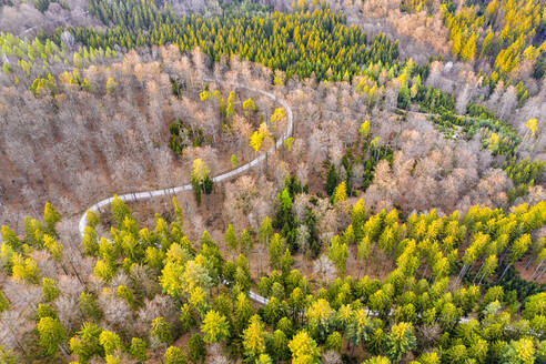 Drone shot of trees growing in Swabian Forest, Baden Wuerttemberg, Germany - STSF02510