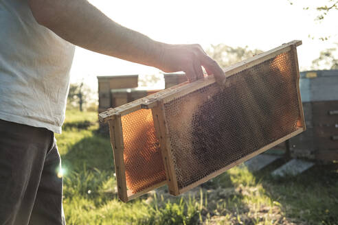 Close-up of beekeeper holding honeycomb trays while walking towards beehives - WFF00383