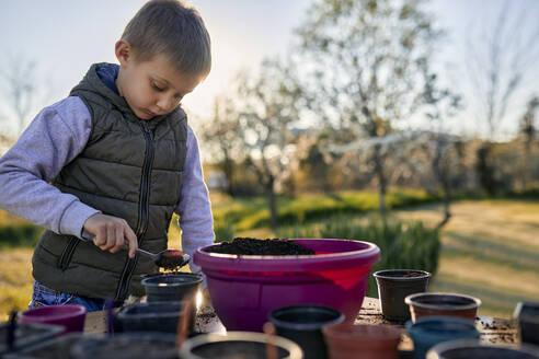 Portrait of boy gardening on table - ZEDF03326