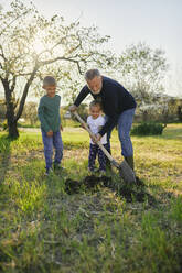 Full length of mature man digging with grandchildren in garden - ZEDF03350