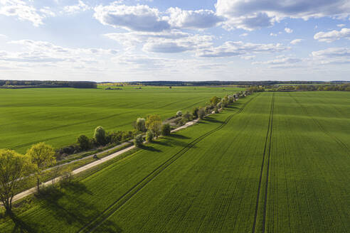 Germany, Brandenburg, Drone view of countryside dirt road and vast green fields in spring - ASCF01313
