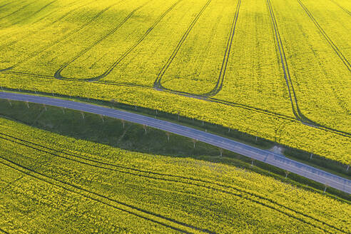 Germany, Brandenburg, Drone view of countryside road cutting through vast oilseed rape field in spring - ASCF01319