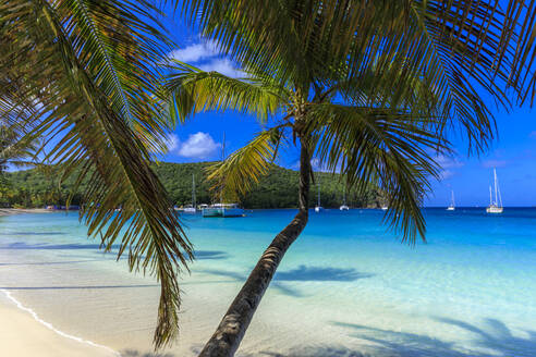 Stunning Saltwhistle Bay, yachts, white sand beach, blue sea, overhanging palm trees, Mayreau, Grenadines, St. Vincent and The Grenadines, Windward Islands, West Indies, Caribbean, Central America - RHPLF14597