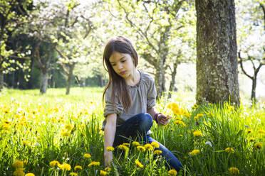 Portrait of girl picking dandelions on a meadow - LVF08863