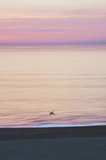 Silhouette seagull flying over beach against purple sky during sunrise - FVSF00254