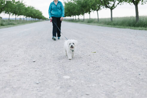 BCrop view of senior woman going walkies with her dog on an alley - XLGF00150