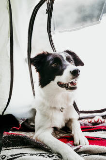 Portrait of a dog in a tent - EBBF00038
