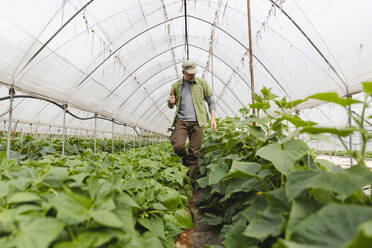 Farmer walking among the vegetables grown in the greenhouse, organic agriculture - MRAF00550