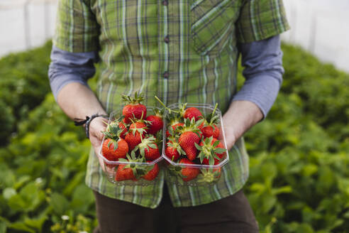 Farmer holding freshly picked strawberries, organic farming - MRAF00562
