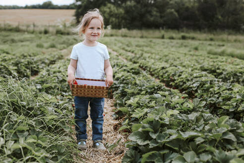 Girl picking ripe strawberries on field - VBF00076