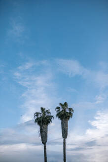 Spain, Two palm trees standing against blue sky - GRCF00253