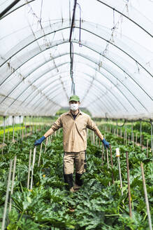 Farmer with protective mask in greenhouse with zucchini plants - MCVF00403