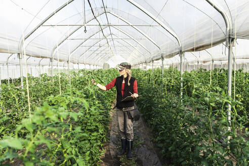 Female farm worker woman checking the growth of organic tomatoes in a greenhouse - MCVF00409
