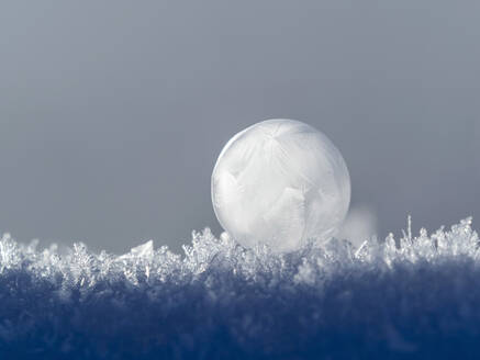 Frosted bubble in winter - BSTF00171
